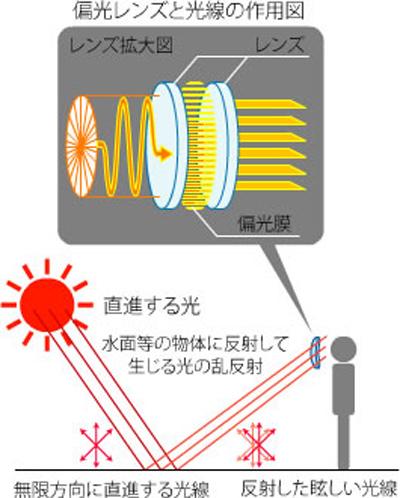 偏光レンズ説明.jpg